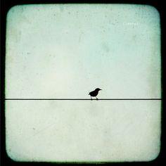 Bird on A Wire TTV light blue and black Original by DreamyPhoto