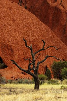 Uluru in Australia | See More Pictures | #SeeMorePictures