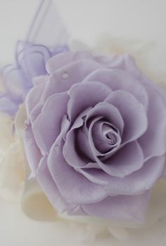 FAVORITE lavender rose..OMG