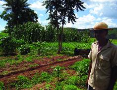 Quais as diferenças entre: Agroecologia, Agricultura Orgânica, Agrofloresta e Permacultura?
