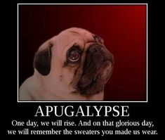 I wouldn't mind a pug apocalypse