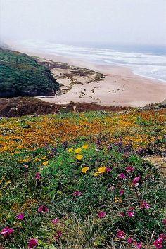 Kehoe beach wildflowers | Flickr - Photo Sharing!