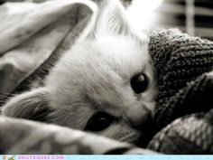 no, i will not squee, but this is aaadorable
