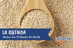 Acabar con el hambre es posible: La Quinoa - La Huertina De Toni Quinoa, Food, Hothouse, Meals