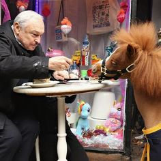 The shortest cop in the country arrived in town this week to start training for a lifetime of serving, comforting, and munching on carrots.