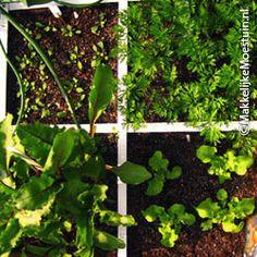 Stap 7: Zaaien en planten op de Makkelijke Moestuin manier - Makkelijke Moestuin
