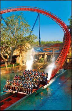 Travel Discover 24 Most Awesome Roller Coaster Rides in the World Busch Gardens Tampa Bay Florida Florida Vacation Florida Travel Usa Travel Orlando Florida Florida Theme Parks Tampa Bay Florida Fort Lauderdale Epcot Magic Kingdom Clearwater Florida, Sarasota Florida, Orlando Florida, Florida Vacation, Florida Travel, Florida Theme Parks, Florida Usa, Usa Travel, Sanibel Island