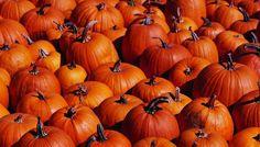 Pumpkin Pie Panna Cotta | The Splendid Table