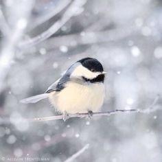 Oiseau sous la neige