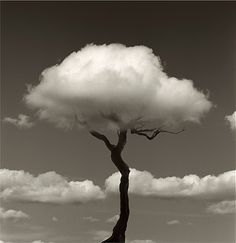 Tree - Photography by Chema Madoz.