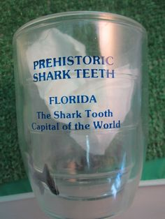 Prehistoric shark teeth Florida Souvenir Clear Plastic Drinking Cup Mug Shark Capital of the World kitschy travel memoribilia scary JAWS by kookykitsch on Etsy