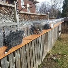 4 cats sitting in a cat enclosure tunnel Outdoor Cat Tunnel, Outdoor Cat Run, Indoor Outdoor, Outside Cat Enclosure, Diy Cat Enclosure, Reptile Enclosure, Cat Jungle Gym, Cat Walkway, Cat Fence