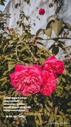Jadilah seperti bunga yang memberi keharuman, bahkan kepada tangan yang telah menghancurkannya 🌺  - Ali Bin Abi Thalib #flower #flowerquotes #bunga #bungaquotes #quotes Poem Quotes, Words Quotes, Qoutes, Motivational Quotes, Funny Quotes, Life Quotes, Ali Bin Abi Thalib, Grateful Quotes, Islamic Love Quotes