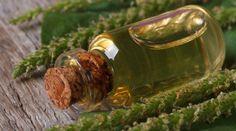 Léčivý jitrocelový olej a domácí hojivá mast na štípnutí i popáleniny