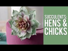 Show-Stopping Gum Paste Statement Flowers Made Easy