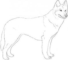how to draw a big dog