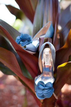 Something Blue: Wedding Shoes