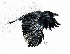 68. Black Wings Dark Words