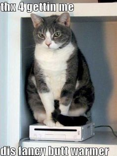 Funny Pictures Of Animals   Fun Claw: Funny Pictures Of Cats - 20 Pics