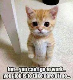 Cat Sherlock