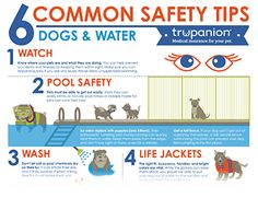 Common Water Safety Tips for Dogs and Cats infographic Water Safety, Dog Safety, Safety Tips, Diy Party Food, Cat Info, Background Diy, Culture Shock, Cat Facts, Dog Cat