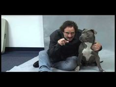 Kim Coates Talks About His Love For The Burbank Animal Shelter and Animals. This video makes me adore Kim Coates even more than I already do. Kim Coates, Charlie Hunnam Soa, Sons Of Anarchy, Cute Celebrities, Animal Shelter, Movie Tv, Hero, Brain Food, Guys