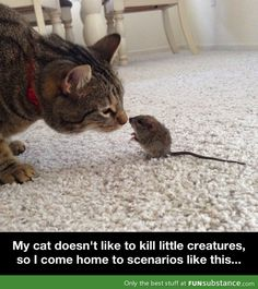 Real life Tom and Jerry