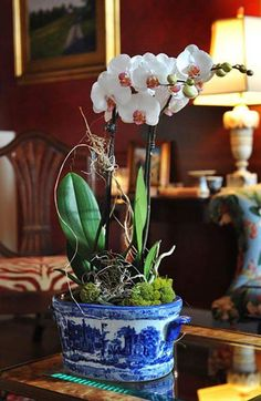 Displaying orchids...