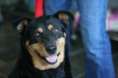 Philly Age years Breed : Rottweiler X Location: Edmonton Intake: May 2013 Rottweiler, Animal Rescue, Age, Animals, Animais, Animales, Animaux, Animal Welfare, Rottweilers