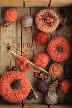 Knitted pumpkins by leimomi. Free pattern here http://thesittingtree.blogspot.ie/2011/10/free-knitting-pattern-jack-be-little.html