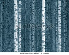 stock photo : birch tree trunks in a finnish forest