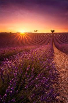 One day in Provence   Lavender field, Provence, Valensole, France. Champ de lavande, Côte d'Azur.