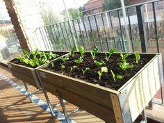 #Cultivar hortalizas en la terraza  http://www.elangreen.com/producto.php?codigo=sembrar-mesas-21901114