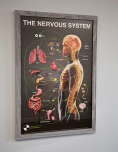 Nervous System Poster: This is our updated Gonstead specific NS chart. It has the spinal levels marked where Dr. Gonstead referenced in his own case notes. Available for purchase, visit www.gonsteaduniversity.com #gonstead #nervoussystem #chiropractic