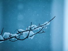 snow_flakes_on_the_branch_wallpaper.jpg (1024×768)