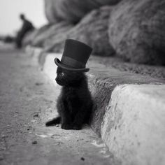 If That Isn't The Cutest Damn Cat In A Hat! - Click for More...