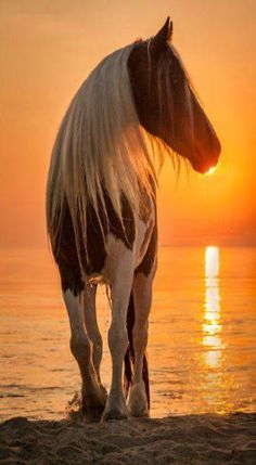 This wild horse, look's like he is kissing the setting sun