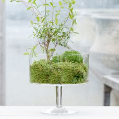 """A tall, slim base elevates terrarium plants in this shapely vessel.- Glass- Hand wash- Indoor use only- Imported10""""H, 4.5""""D, 9.5"""" diameter"""