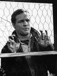 """culture-monde: """" Marlon Brando as Terry Malloy in On The Waterfront """"""""You don't understand. I coulda had class. I coulda been a contender. I coulda been somebody, instead of a bum, which is. Marlon Brando, Vintage Hollywood, Classic Hollywood, Hollywood Images, Hollywood Men, Elia Kazan, The Blues Brothers, Little Bit, Great Films"""