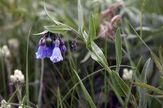 Bluebells Hope Images, Bracelets, Artwork, Plants, Work Of Art, Auguste Rodin Artwork, Bracelet, Plant, Bangles