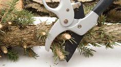 Rośliny lecznicze: terminy zimowych zbiorów roślin leczniczych Pruning Shears, Garden Tools, Herbs, Therapy, Gardening Scissors, Yard Tools, Herb, Medicinal Plants