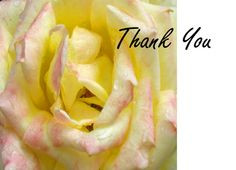 Thank You White and Pink #Rose Greeting Card