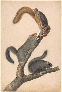 John James Audubon,