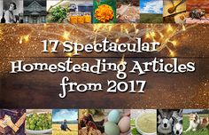 The very best homesteading articles from Imperfectly Happy, written in 2017. These are the homesteading articles YOU loved and visited the most.