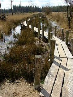 Path Dwingelderveld, the Netherlands Go Hiking, Hiking Trails, Beautiful World, Beautiful Places, Weekender, Forest Park, Outdoor Life, Travel Around The World, Where To Go