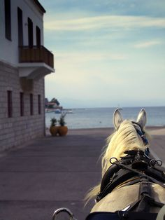 spetses horse taxi