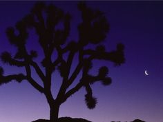 Joshua tree from photography.nationalgeographic.com