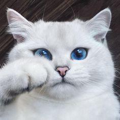 Conoce al gato con los ojos más hermosos del mundo - Taringa!