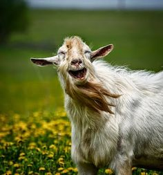 Guy smiling animals, happy animals, animals and pets, funny animals, cu Smiling Animals, Cute Animals Puppies, Happy Animals, Cute Baby Animals, Farm Animals, Animals And Pets, Funny Animals, Cute Animal Videos, Funny Animal Pictures