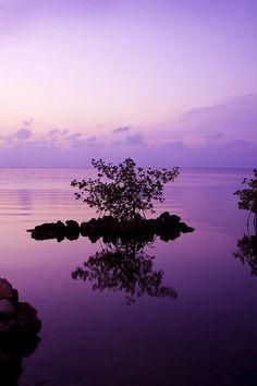 Purple ! #purple #colors #colour #